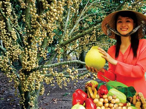 Mùa tham quan vườn ăn trái ở miền Tây - ảnh 1
