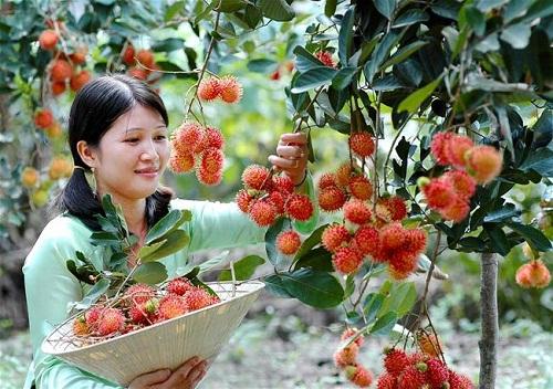Mùa tham quan vườn ăn trái ở miền Tây - ảnh 2